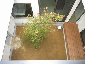 中庭の植樹